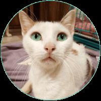 female-cat
